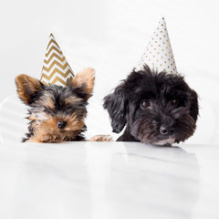 two small dogs wearing paper birthday hats