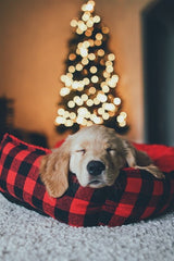 puppy sleeping in front of Christmas tree