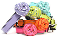 colorful luxury dog collars