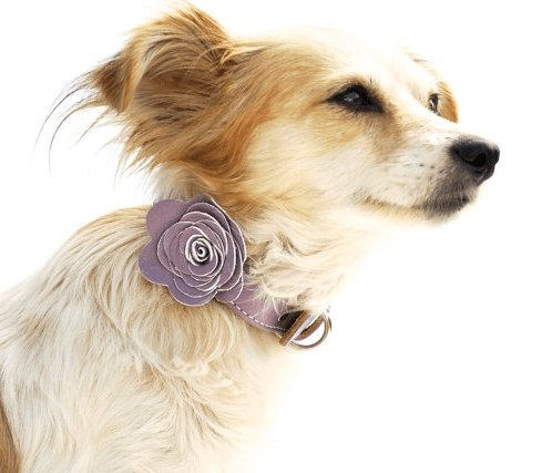 The Flower Child Lavendar Leather Dog Collar