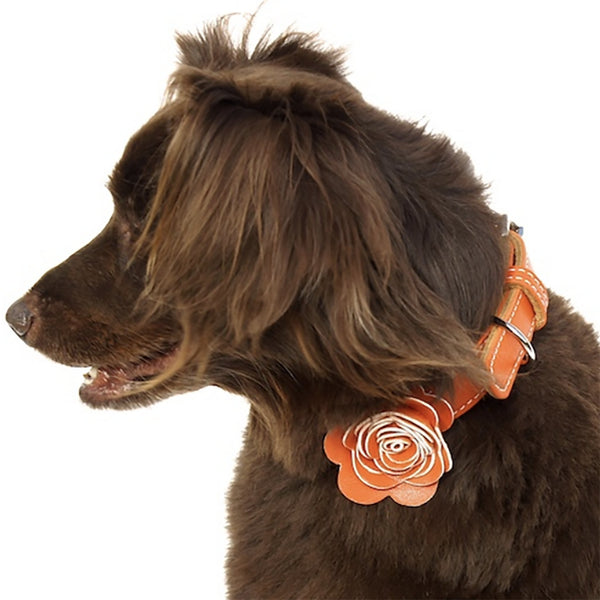 The Flower Child Orange Kiss Leather Dog Collar - LuxeMutt