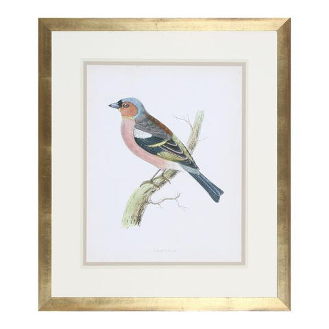 Multicolored Finch Painting