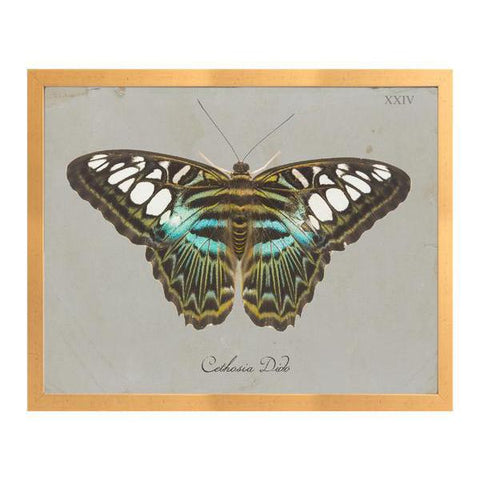Turquoise Butterfly D