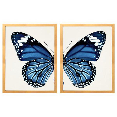 Split Blue Butterfly C