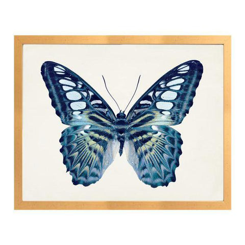 H Blue Butterfly