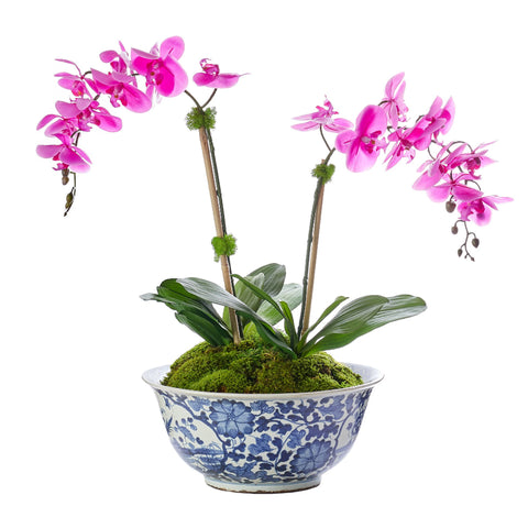 Petite Double Fuchsia Orchid In Traditional Floral Bowl