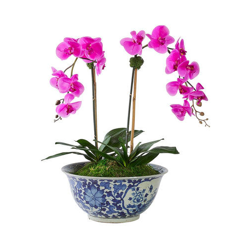 Double Fuchsia Orchid in Vigne Florale Bowl