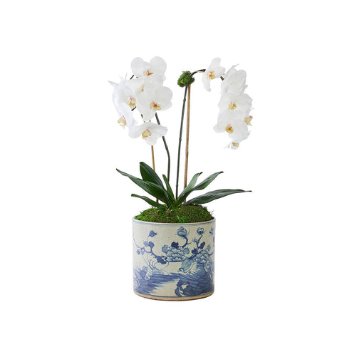 Double White Orchid in Oiseau Vase