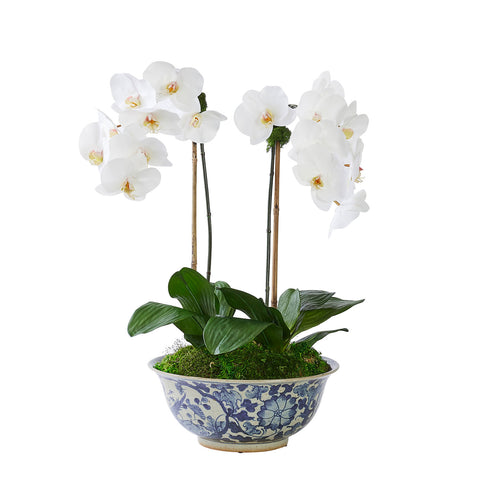 Double White Orchid in Vigne Florale Bowl