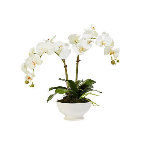 Faux Double White Orchid in White Stone Bowl