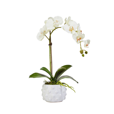 Faux Single White Orchid in Spotted Pot