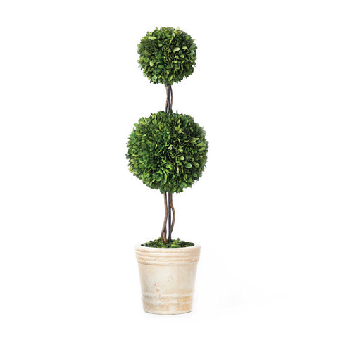 Large Boxwood Topiary