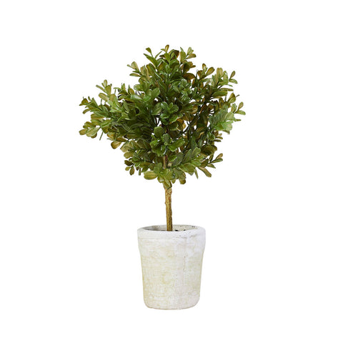 Single Boxwood Topiary Set