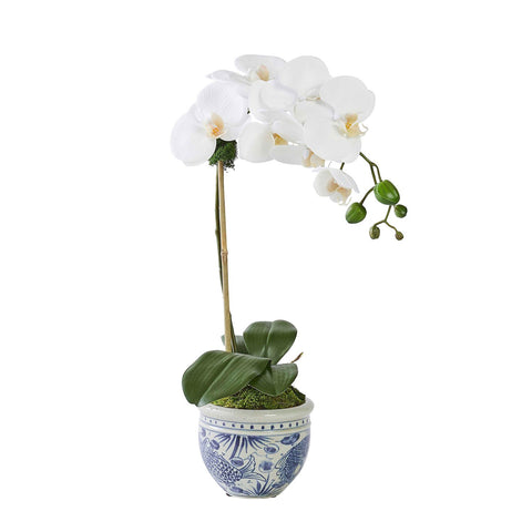 Single White Orchid in Mer Vase