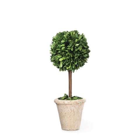 Small Boxwood Topiary