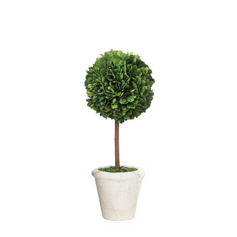 Mini Boxwood Topiary