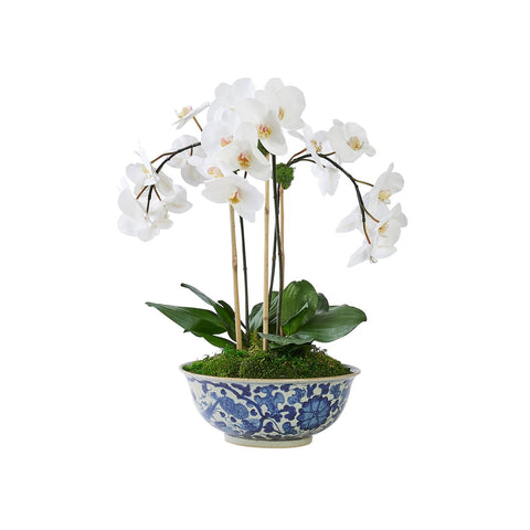 Triple White Orchid in Traditional Floral Bowl