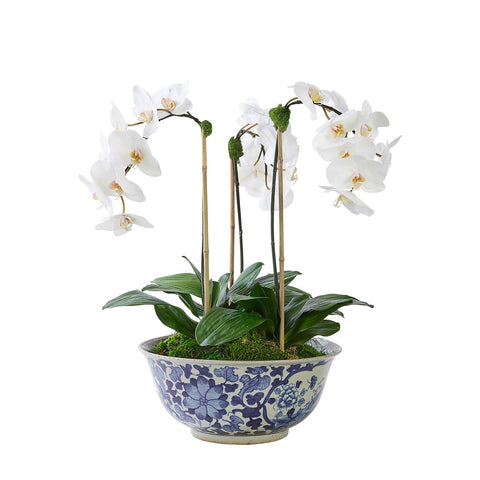 Triple White Orchid in Vigne Florale Bowl