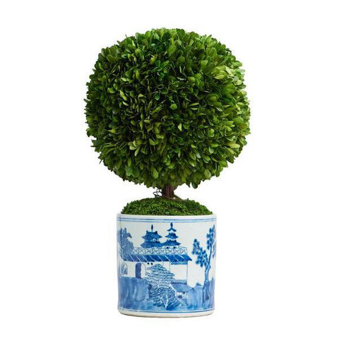 Boxwood Topiary in Cylindrical Pot