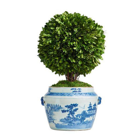 Boxwood Topiary in Oval Pot