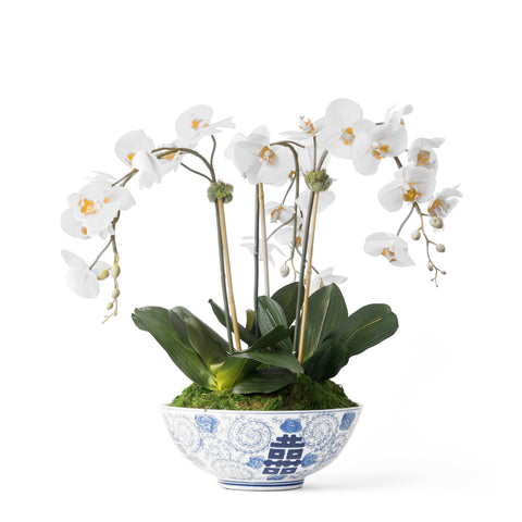 Triple White Orchid in Traditional Ceramic