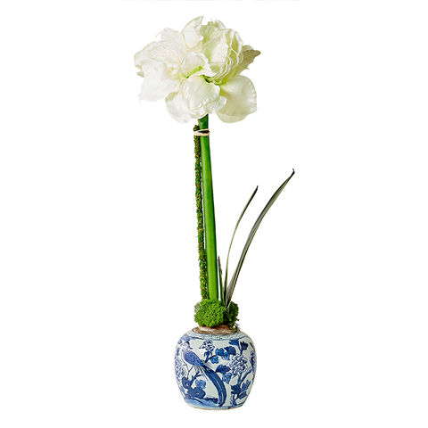 White Single Amaryllis