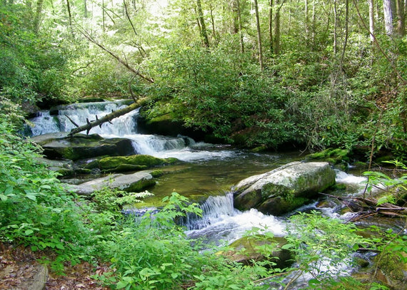 7 of the Best Places to Fly Fish in the Smokies
