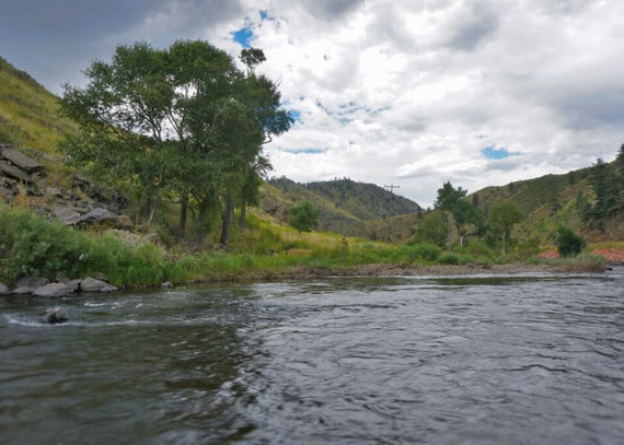 Forever Wild and Scenic: The Cache La Poudre River