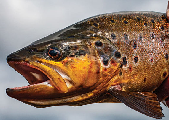 Breakout Hits: The 20 Best Fishing Tips for Early Spring