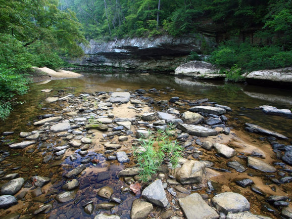 6 Top Fly Fishing Spots in Alabama