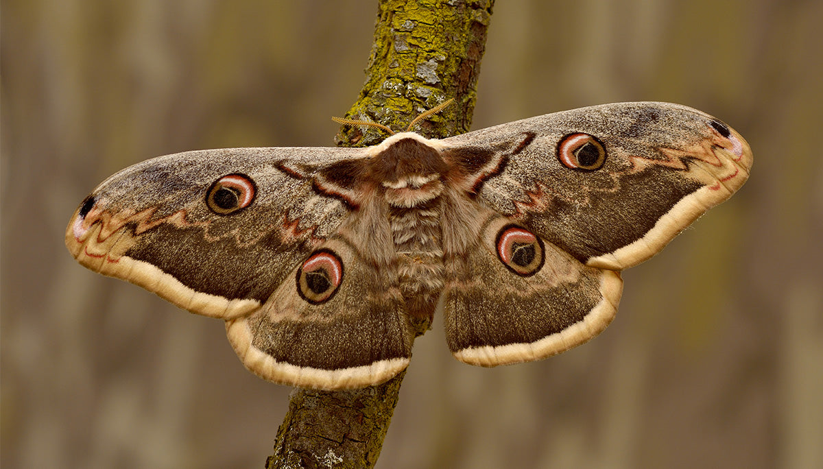 Moth on a tree branch