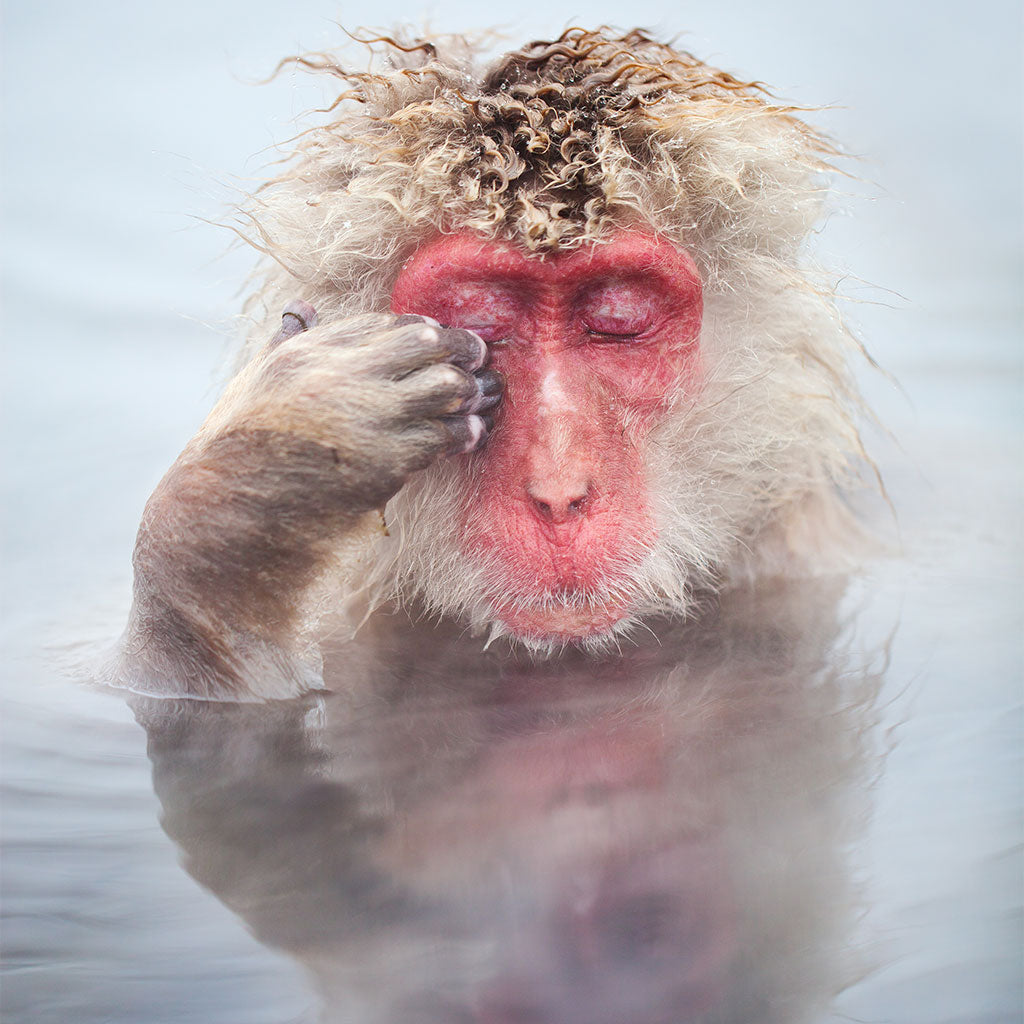 Macaque in Hotspring