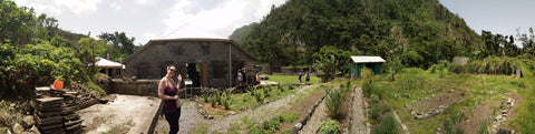 Panoramic view at the cacao farm in Dominica Island