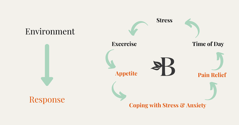 how-the-endocannabinoid-system-works-and-effects-your-body