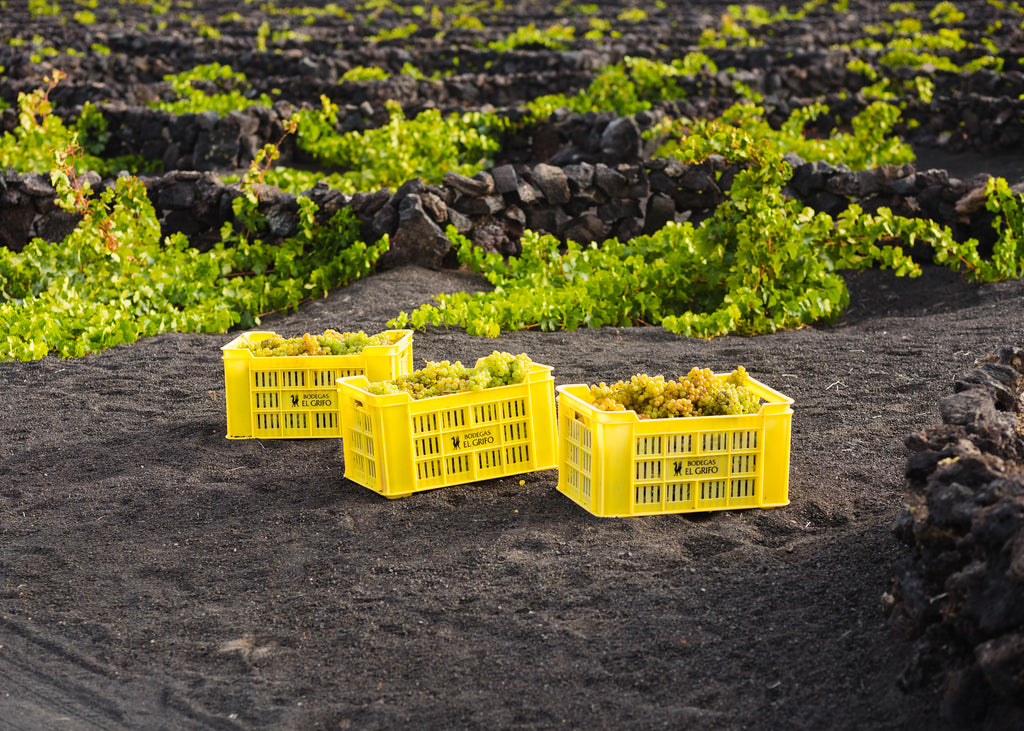 Baskets of Grapes