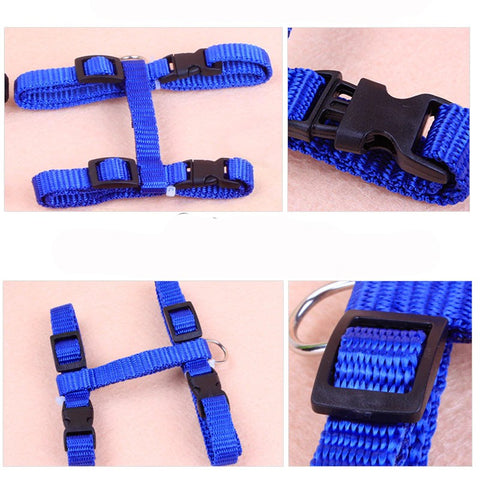 Cat leash adjustable in great colors