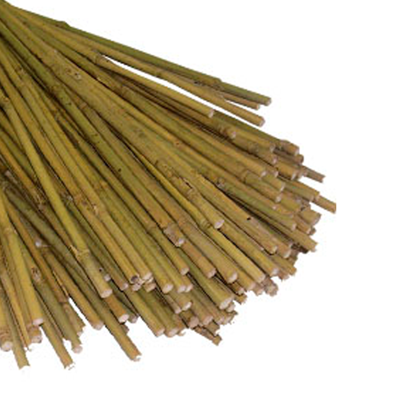 Bamboo canes - pack of 250  - 150cm long