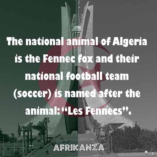 National animal is the Fennec fox