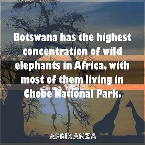 Botswana has the highest concentration of wild elephants in Africa, with most of them living in Chobe National Park and the Linyanti region.