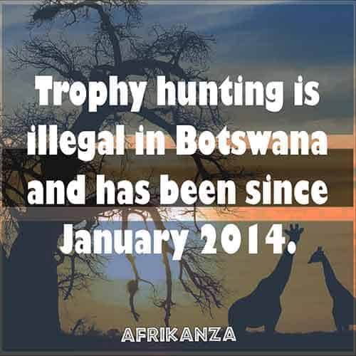 Trophy hunting is illegal in Botswana and has been since January 2014.