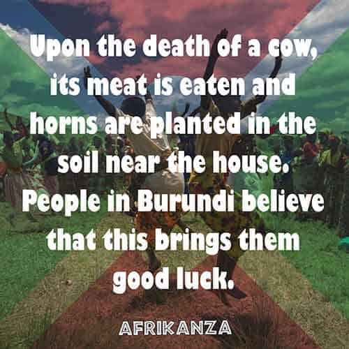 Upon the death of a cow, its meat is eaten and horns are planted in the soil near the house. People in Burundi believe that this brings them good luck
