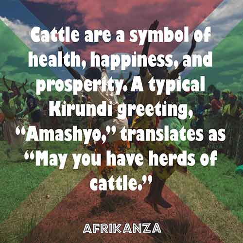 "Cattle are a symbol of health, happiness, and prosperity. A typical Kirundi greeting, ""Amashyo,"" translates as ""May you have herds of cattle."""
