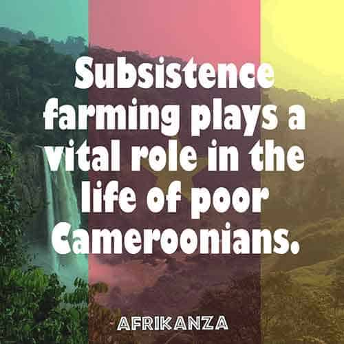 Subsistence farming plays a vital role in the life of poor Cameroonians