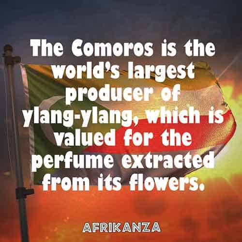 Comoros is the world's largest producer of ylang-ylang, which is valued for the perfume extracted from its flowers