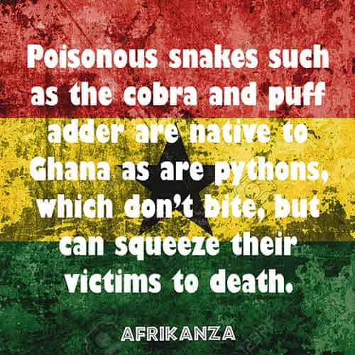 Poisonous snakes such as the cobra and puff adder are native to Ghana as are pythons, which don't bite but can squeeze their victims to death