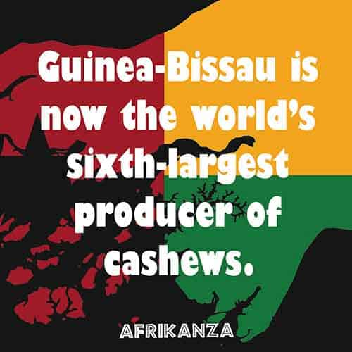 Guinea-Bissau is now the world's sixth-largest producer of cashews
