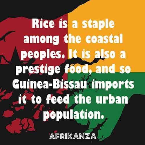 Rice is a staple among the coastal peoples. It is also a prestige food, and so Guinea-Bissau imports it to feed the urban population