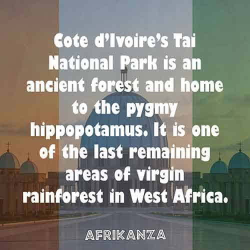 Cote d'Ivoire's Tai National Park is an ancient forest and home to the pygmy hippopotamus. It is one of the last remaining areas of virgin rainforest in West Africa