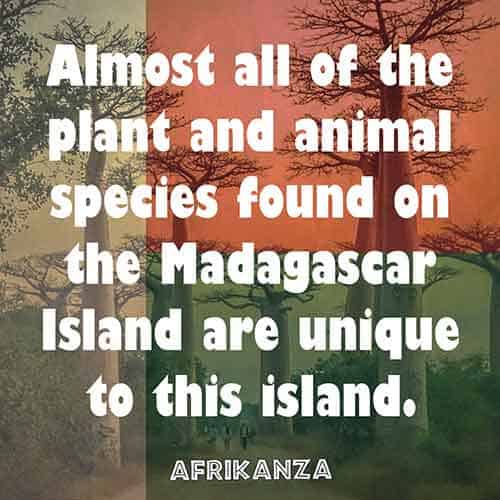 Almost all of the plant and animal species found on the Madagascar Island are unique to this island