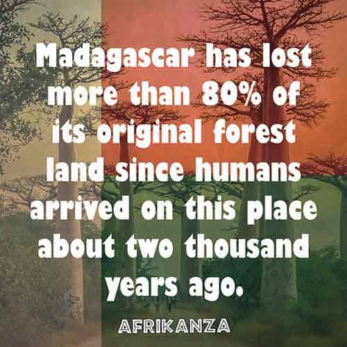 Madagascar has lost more than 80% of its original forest land since humans arrived on this place about two thousand years ago